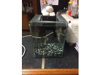 Fluval chi 19 litre fish tank tropical setup