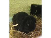 Larry the rabbit