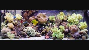 Wanted reef aquarium