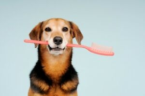 SEDATION-FREE TEETH CLEANING FOR PETS