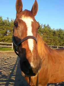 Gelding for lease!