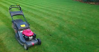 grass cutting, hedge trimming, stump grinding/removal & more