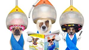 Toilette canin/dog grooming