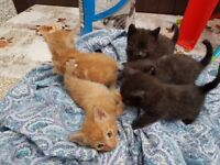 5 Adorable Kittens for sale