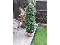 Artifical box hedge plant realistic looking with pot