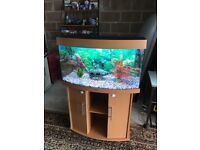 180l Juwel bow front fish tank full set up v g c with stand filter heater 2 x t5 light gravel orname