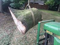 Free fire wood in Coventry
