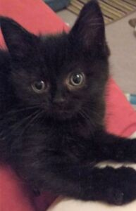 """""""Daisy"""" & """"Zorro"""" adorable kittens now available for adoption"""