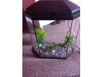 Cold water fish tank with pump and light