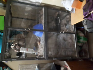 2 lovely Chinchillas looking for a good home