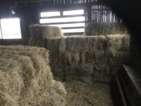 Hay bales for outdoor seating. Events and parties.