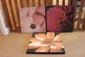 Flower Canvasses (3 of)