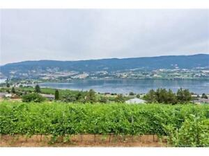 Have You Ever Dreamed of Owning a Vineyard?