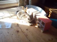 Young Female Tabby Cat looking for New Home