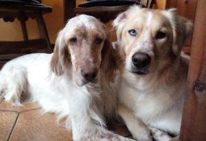 Garderie pour chiens, rongeurs, lapins et oiseaux à Châteauguay