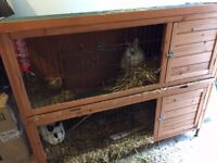 Two rabbits with hutch and complete set for sale. £40 in total