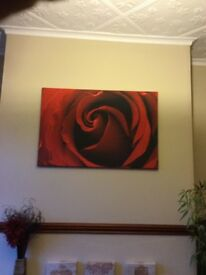 Red rose wall picture