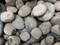 Garden beach Pebbles Cobbles, decorative, natural stone (in 20 Kg bags, £2/ bag). 22 bags total