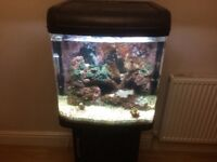 Fish tank Kent marine bio reef 94ltr