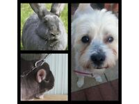 Going Away And Looking For A Pet Sitter? Need A Local Dog Walker? We Offer Pet Sitting For All Pets