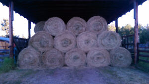 Round bails for sale