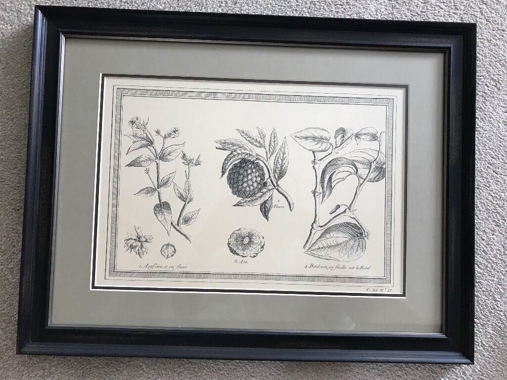Large Framed Print by Neptune (Furniture)   in Fareham, Hampshire ...