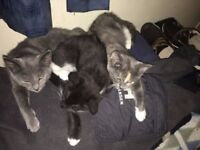 Kittens - In need of new homes now (12 weeks old)