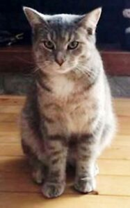 "KLAWS: LOST Monarch/Colborne St,Lindsay ""Gandalf the Gray"""