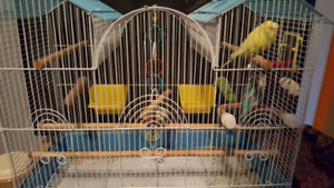 2 Quiet, Tamed budgies with cage and toys