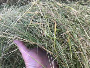 Premium Hay for Sale - 5x5 Net Wrapped Round Bales