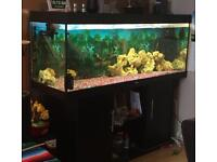 Juwel rio 400 set up with fish