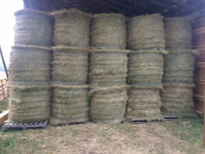 Hay for Sale - Timothy - Round Bales