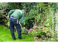 Grass, hedges & edges. Grass cutting , hedge cutting, garden maintenance