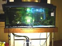 Fish tank and console table