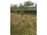 Tree/sapling spiral guard