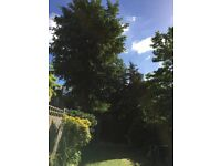 Red Branch Tree Services. All aspects of tree and hedge work undertaken