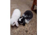 3 beautiful baby rabbits