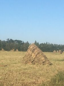 Organically certified square bales