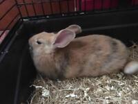 8 week old Baby Rabbits!