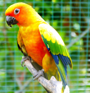 Parrot wanted!