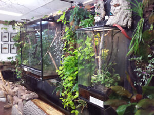 PETERBOROUGH REPTILE'S INSECT GARDEN IS NOW OPEN