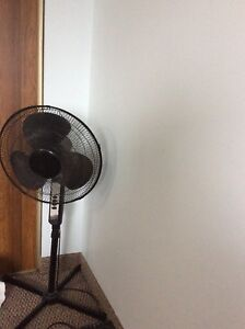 Two pedestal fan available