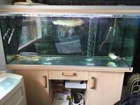 Fish tank aquarium Rena 450 lite plus fish for sale