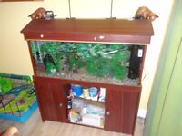 tropical fish tank - 125 litres - including all you need