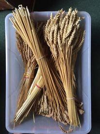 Prepared straw & wheat for craft making corn dolls etc