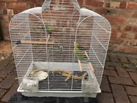 3 young budgies with cage and food