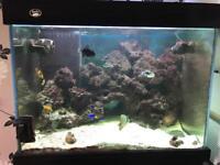 Marine fish. Live rock. Set up