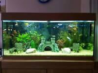 180 Litre Juwel Aquarium