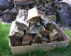 Seasoned firewood for backyard and camp fires