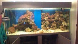 large fishtank 7/3/3 foot